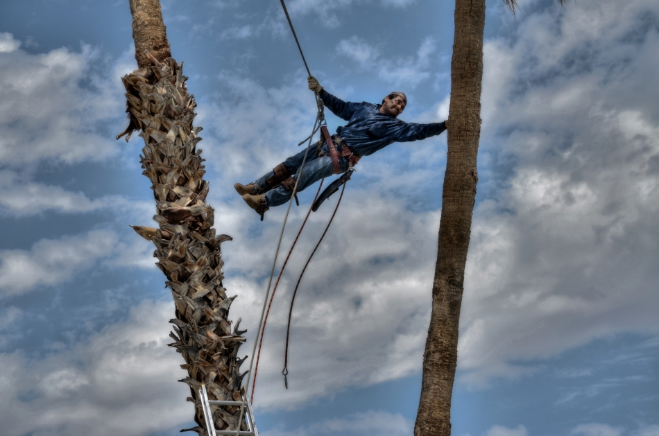 Sunshine Superman: Our landscaper floats with the greatest of ease between our now departed palm trees.