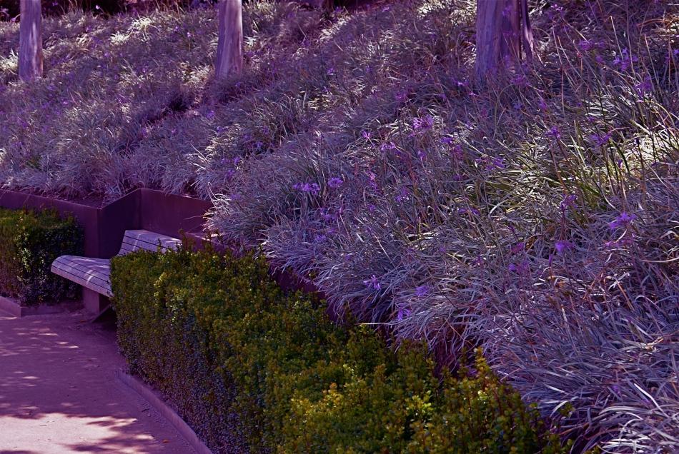 Dream Gardens, Los Angeles (2013). 1/250 sec., f/5.6, ISO 100, 35mm.