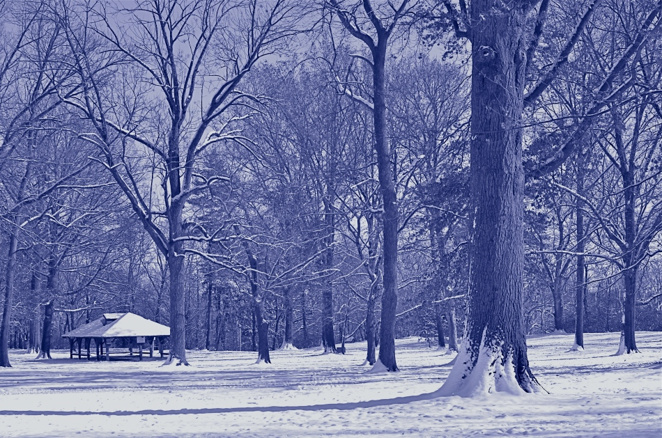 Another in-camera conversion, this time to cyanotype. This says winter to me.