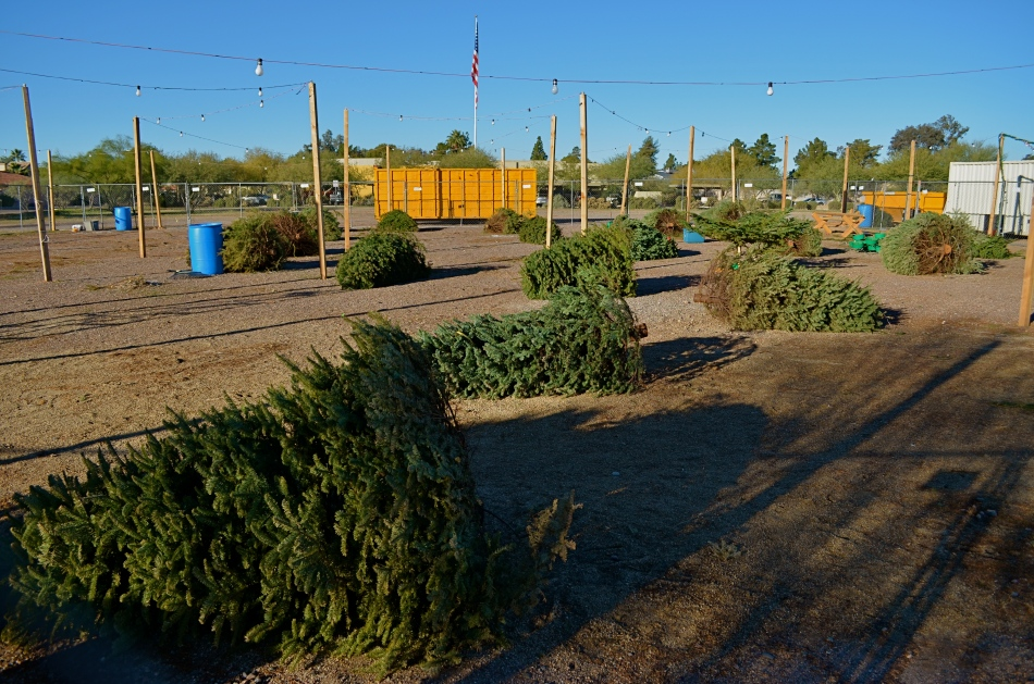 The Leavings: Christmas Tree Lot, Phoenix, AZ, 12/26/13. 1/500 sec., f/5.6, ISO 100, 18mm.