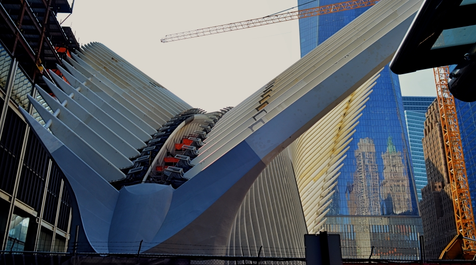 Oculus Aloft: the steel wings of the new PATH terminal for New York's World Trade Center nears completion in 2015.
