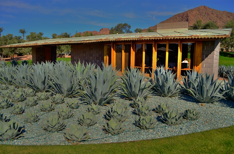 The detached guest house, basically a low profile studio apartment, landscaped with local agave plants.
