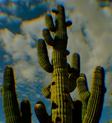 Extreme chromatic aberration (color fringeing) along the exterior line of the cactus.