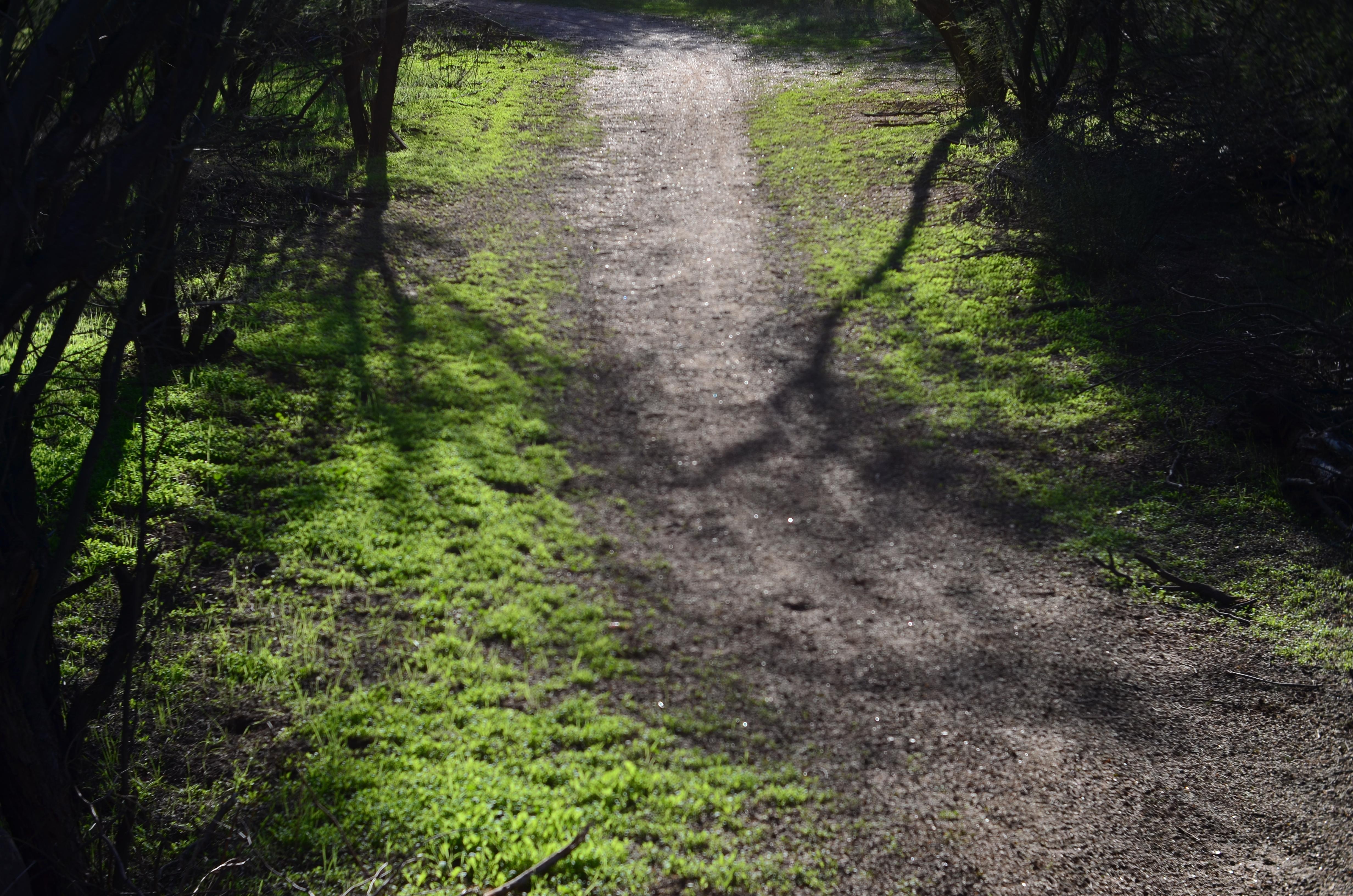 A sunlit forest path.